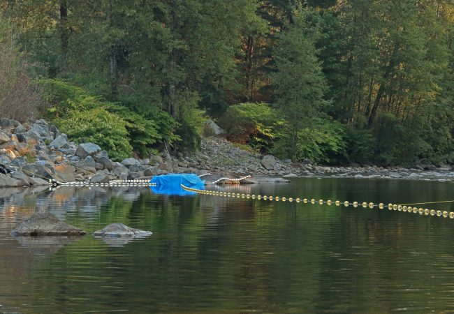 More Hope for the Seymour River Salmon and Steelhead