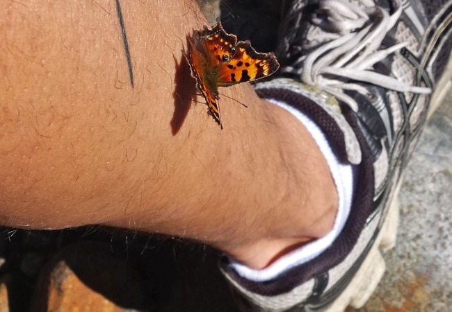 A Green Comma on the Leg