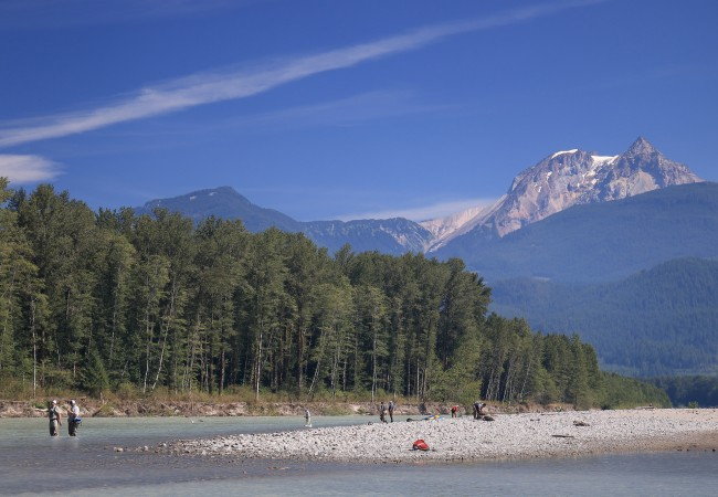 Pink Salmon on the Squamish River