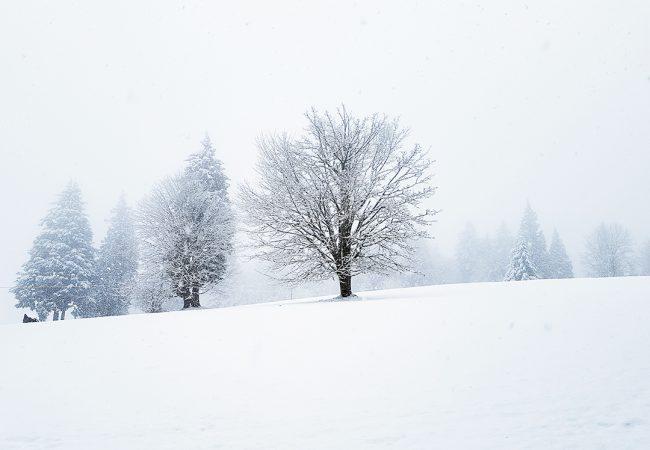 Winter on Burnaby Mountain