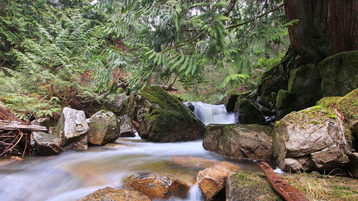 Halfmoon Creek BC