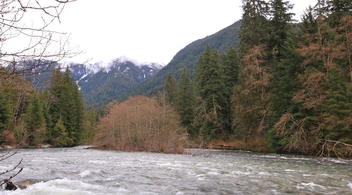 Seymour River fisherman's trail