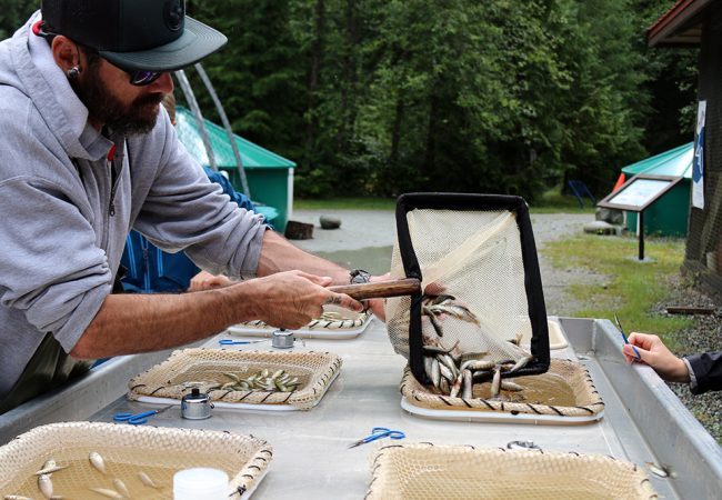 The Seymour Salmonid Society: Working Miracles to Avert a Disaster