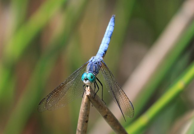 The Dragonflies of Wormy Lake